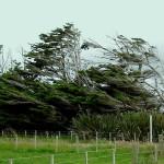 NIVSL Hoor de wind waait…!